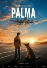 2021俄罗斯高分剧情片《忠犬帕尔玛》高清下载